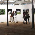 Fjällkor – exhibitions